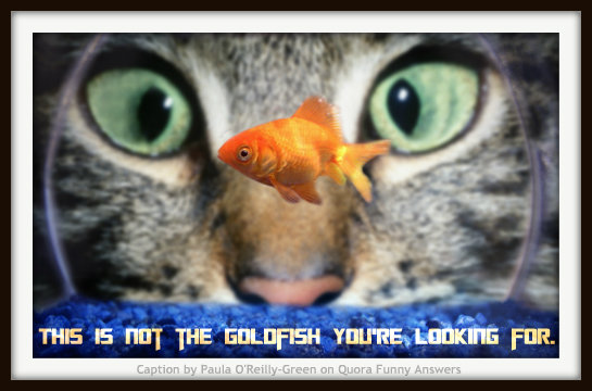 Caption Competition 6: Goldfish