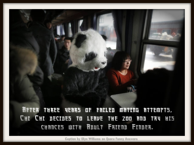 Caption Competition. Man in panda suit on train. Caption: After three years of failed mating attempts, Chi Chi decides to leave the zoo and try his chances with Adult Friend Finder