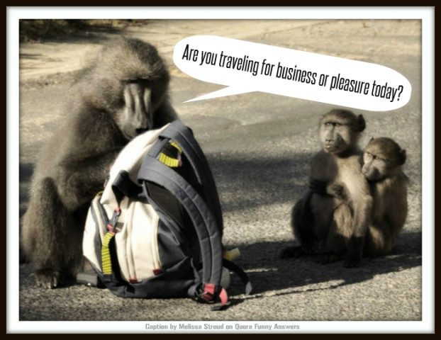Graeme Shimmin Caption Competition 60 - Baboons